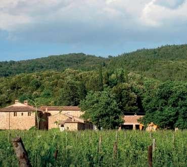 Bottega - Site Launch - Territory - Montalcino - 01