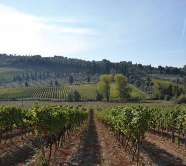 Bottega - Site Launch - Territory - Montalcino - 02